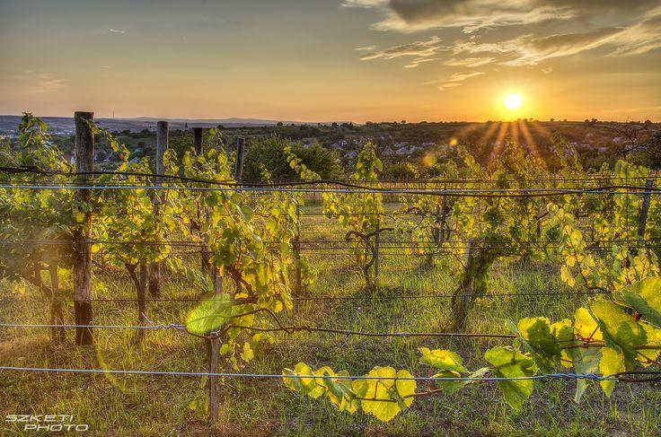 Tóth Gábor: A móri szőlő, és a naplemente Aznap gyönyörű idő volt, így úgy döntöttem, kicsit tekergek egyet, amíg fent van a nap. Ez az egyik legjobban sikerült képem aznapról.  Több kép Gábortól: www.facebook.com/SzketiPhoto