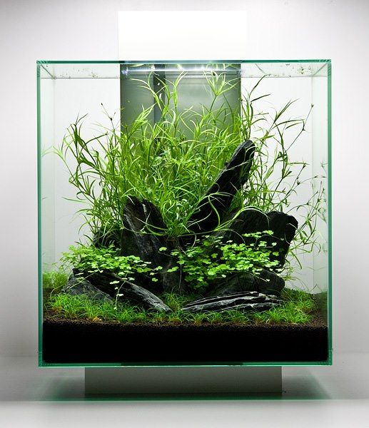 Fluval Edge aquascape by Oliver Knott | to share on http://iwaqu.blogspot.de/2013/01/fluval-edge-step-by-step-aquascape.html