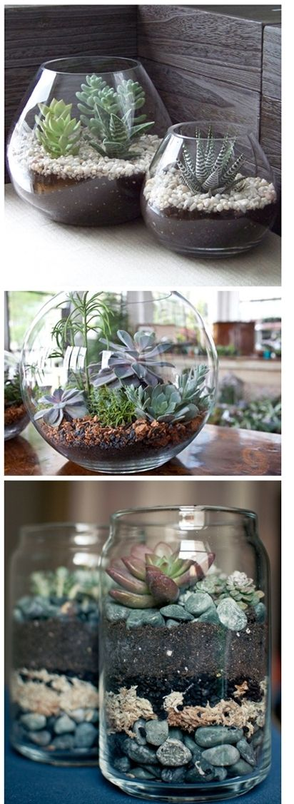 Will someone make me a succulent terrarium?
