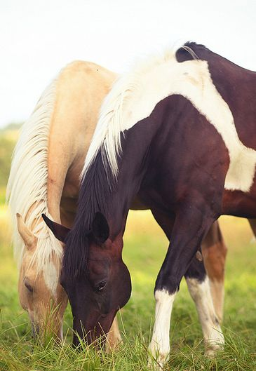 My favorite horse? It's impossible to choose. I love dappled horses, and a blond mane gives me life❤️
