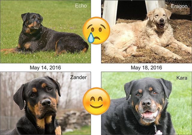 For the second time in 5 days we experienced the loss of one of our resident dogs followed immediately by the official adoption of another. Feelings are so conflicted being that we mourn the loss of one dog and yet rejoice for another as they begin a new life in their forever home.