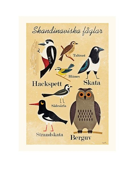 Skandin. Fåglar Poster