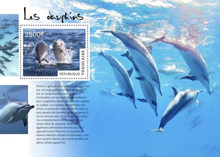TG 14505 bDolphins (Stenella attenuata)