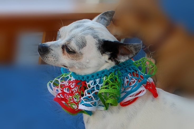 167 besten Chihuahua Fun Bilder auf Pinterest   Kleine hunde ...