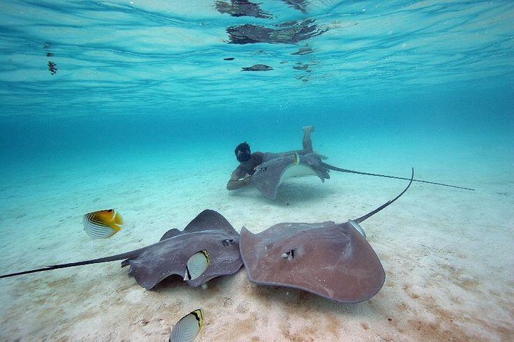 Pacific Ocean Animals | Ocean buddy's...... | Pinterest Pacific Ocean Underwater Animals