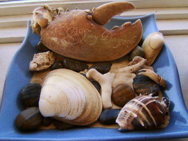 Nova Scotia Sea Shells