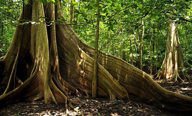 Pflanzen im Regenwald - Abenteuer Regenwald