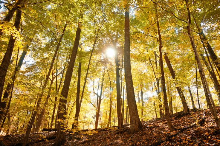 Enjoy Wisconsin's fall colors and weather on these six trails close to the city.