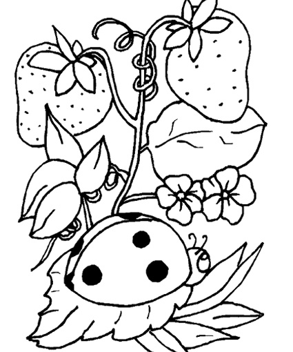 105 best Homeschool Colouring pages images on Pinterest Coloring - fresh hello kitty ladybug coloring pages