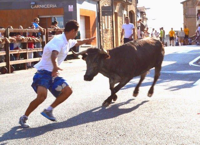 Santacara: Vacas de Santos Zapateria