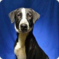 Adopt A Pet :: *C.J. - Ocala, FL