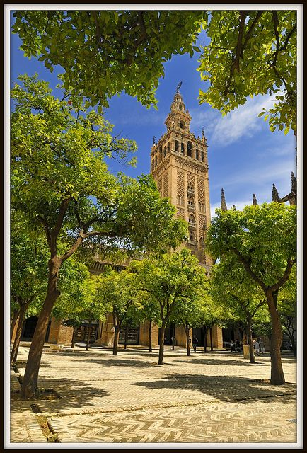 Orange Tree Courtyard - Seville Cathedral,  Andalucia, Spain