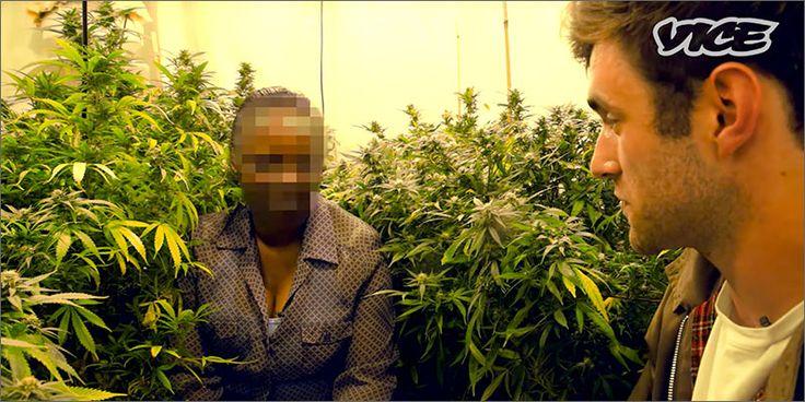 O Reino Unido consome o maior número de drogas na Europa. Canábis é a escolha mais popular, e o mercado é estimado em mais de 6 mil milhões de Libras.