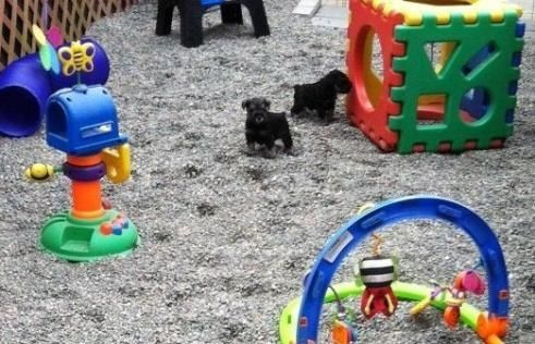 puppy play areas - Google Search