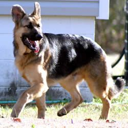 Female German Shepherd Names