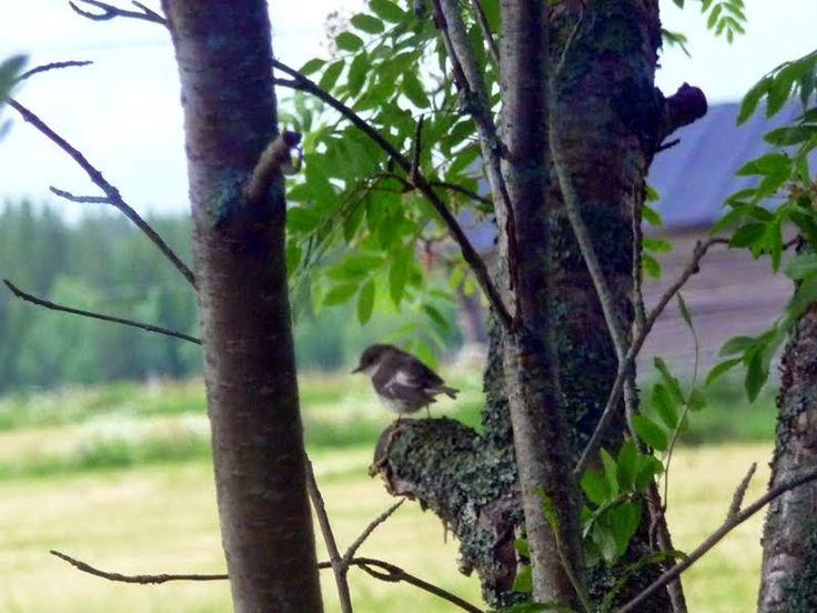 Pörheitä lintuja ja pikselöitynyttä puuta