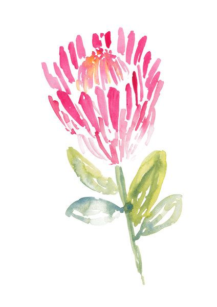 The original watercolour painting of a brightly coloured tango pink Protea with olive coloured leaves. Size: 210 x 270 mm Portrait (unframed)