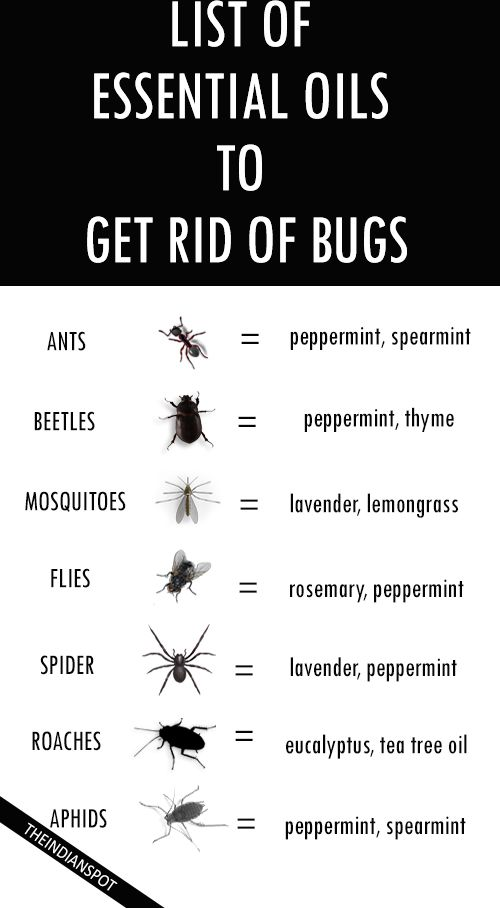 Oils to Get Rid of Bugs