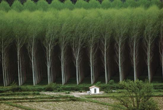 Planting Under Eucalyptus Trees : Eucalyptus google trees floors plants