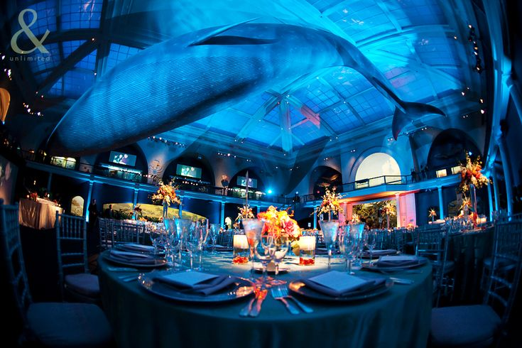 Under The Sea Prom Decorations Hall Of Ocean Life