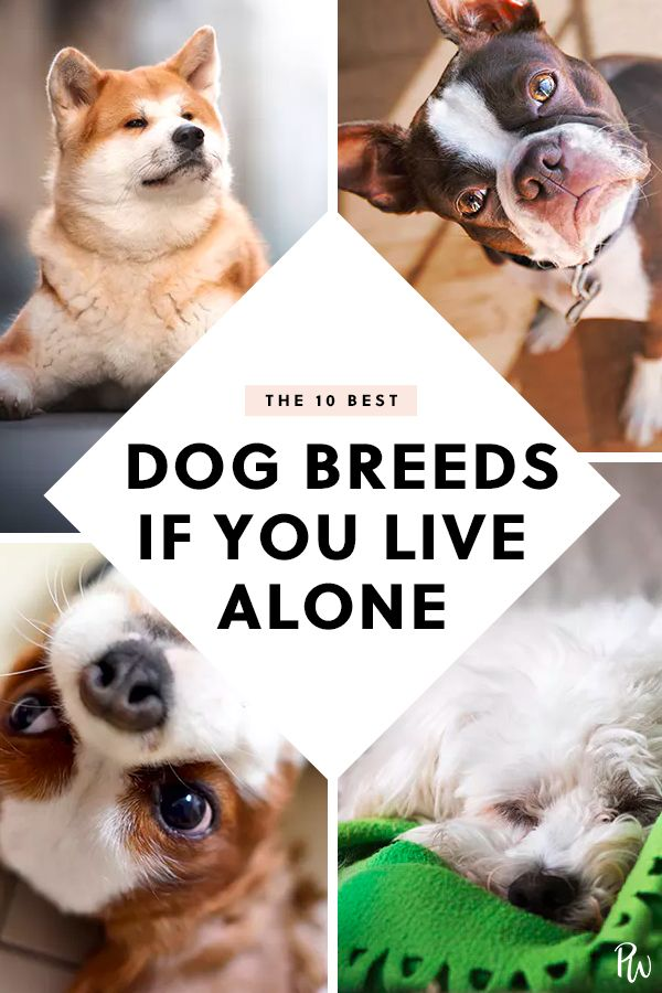 The 10 Best Dogs For People Who Live Alone Dogs And Kids Best Dogs For Families Best Dog Breeds