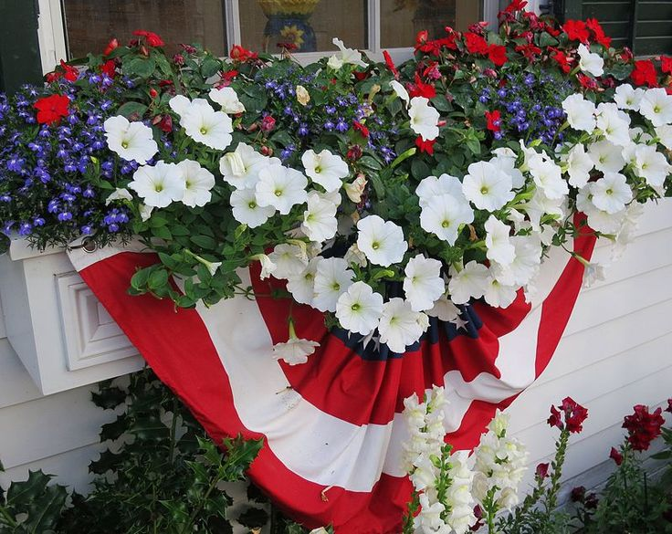 Edgartown window box with shade lovers, lobellia, scarlet impations and white petunias draped with heavy fabric bunting.