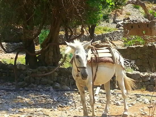 Greece Samaria Gorge National Park | Samaria Gorge National Park: donkey the only transport in Samaria ...