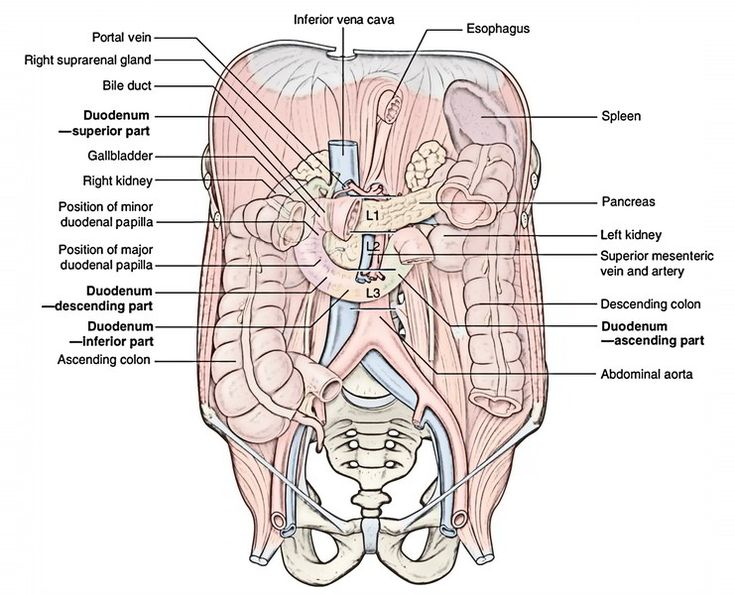 43 best flashh images on Pinterest | Medicine, Anatomy and Anatomy ...