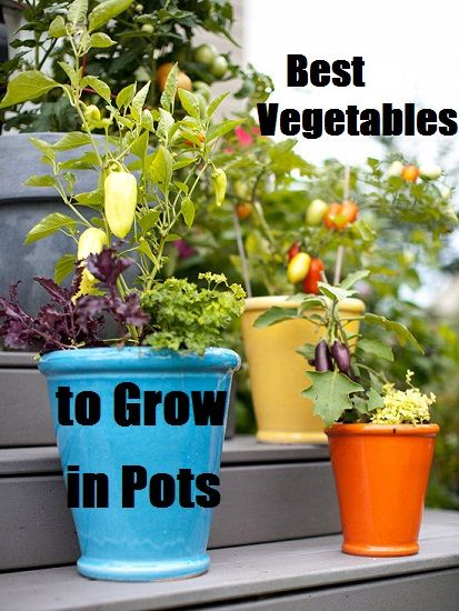 good examples of vegetables we can literally grow on our doorsteps, on balconies, on patios or even on window sills in pots.