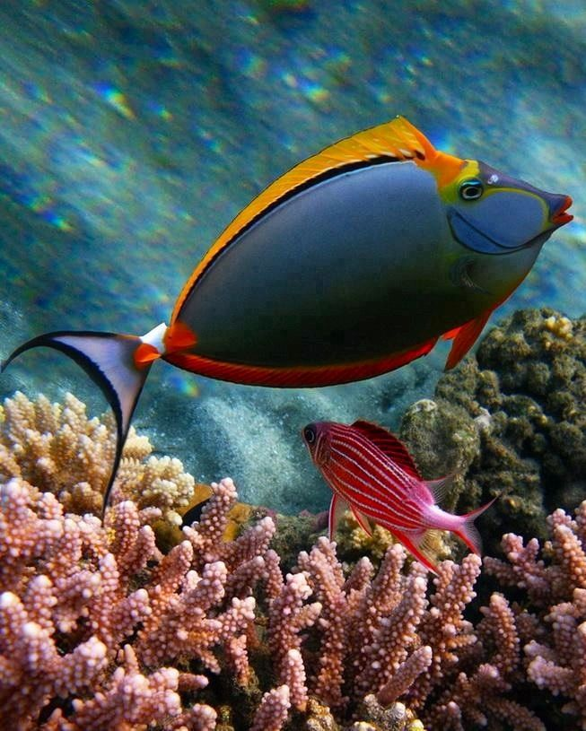 Coral reef fish | things i love | Pinterest