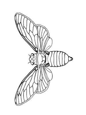 Insects coloring page 64