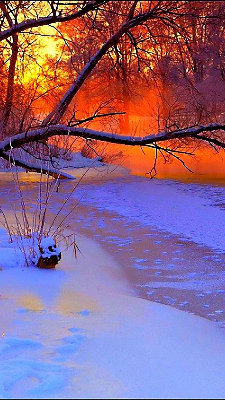 winter, sunset, evening, branches, tree, pond, cold, snow