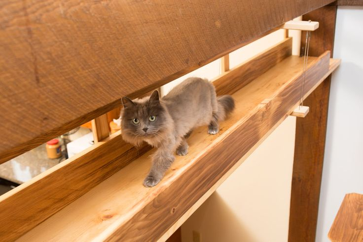 Transform your home or adoption center with a custom catification project.
