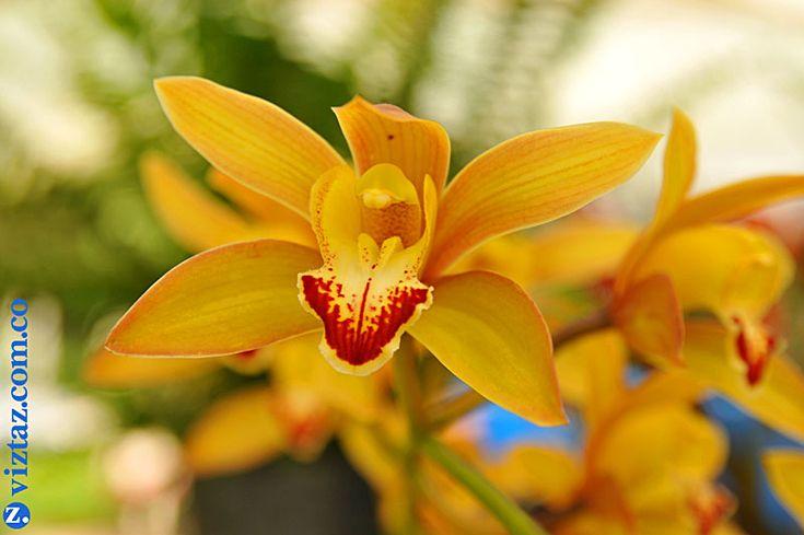 Cultivo de flores ex ticas orqu deas cachipay - Flores tropicales fotos ...