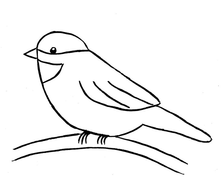 How to draw a bird step by step easy with pictures drawing step drawings and bird