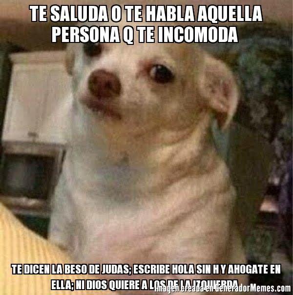 TE SALUDA O TE HABLA AQUELLA PERSONA Q TE INCOMODA  TE DICEN LA BESO DE JUDAS; ESCRIBE HOLA SIN H Y AHOGATE EN ELLA; NI DIOS QUIERE A LOS DE LA IZQUIERDA   - Meme perro chihuahua enojado