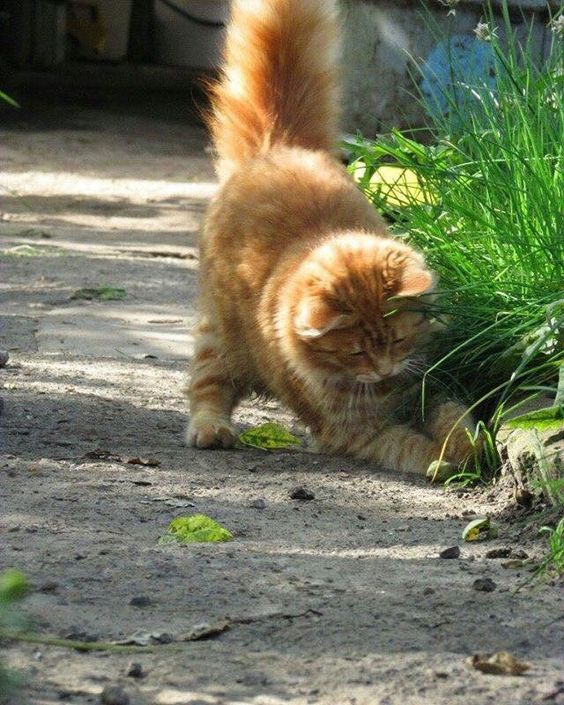 A couple of funny cats take an adventure in their own backyard. Does your  cat have adventures in the back yard or do you keep your baby inside where  it's ... - Outdoor Adventure With Some Funny Cats [VIDEO Animal , Puppy