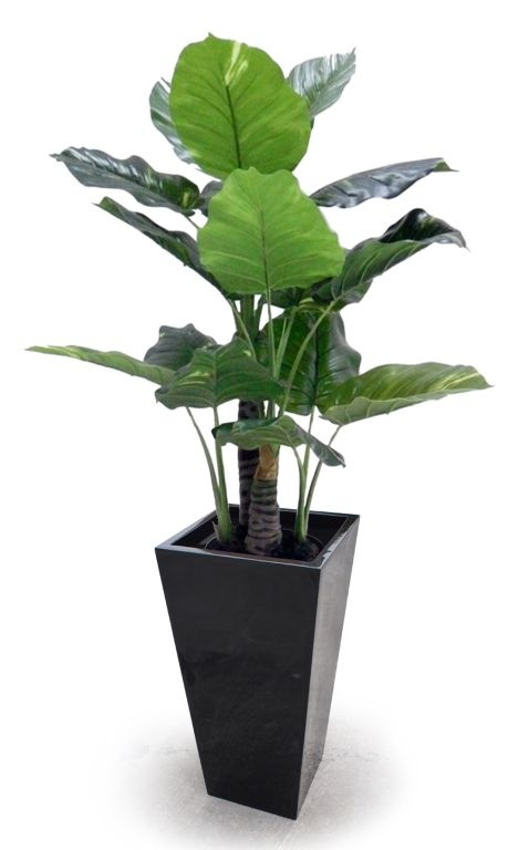 Pot Plant Wedge - Growum.