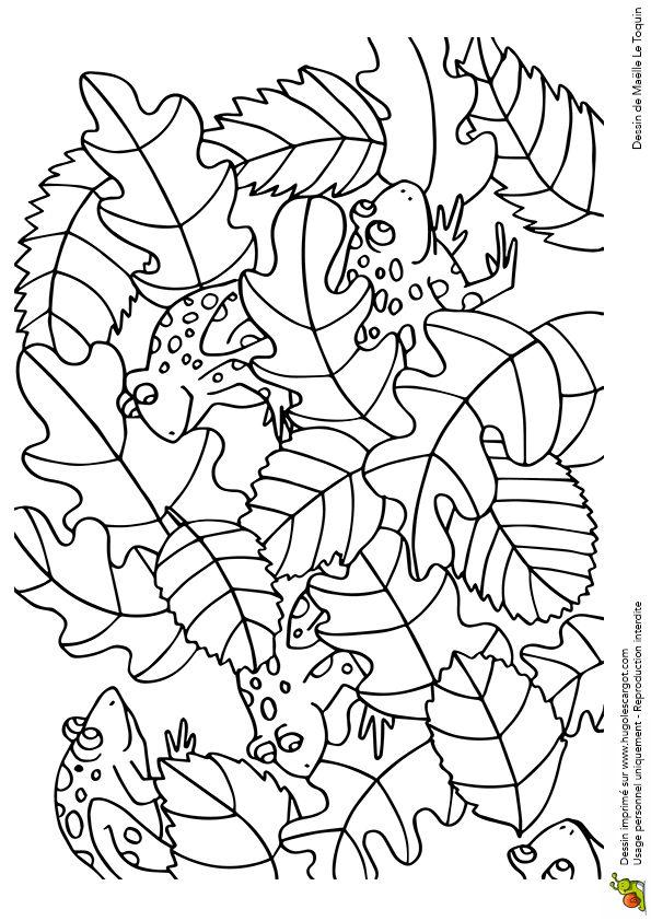 Coloriage cache cache feuilles crapauds sur Hugolescargot.com - Hugolescargot.com
