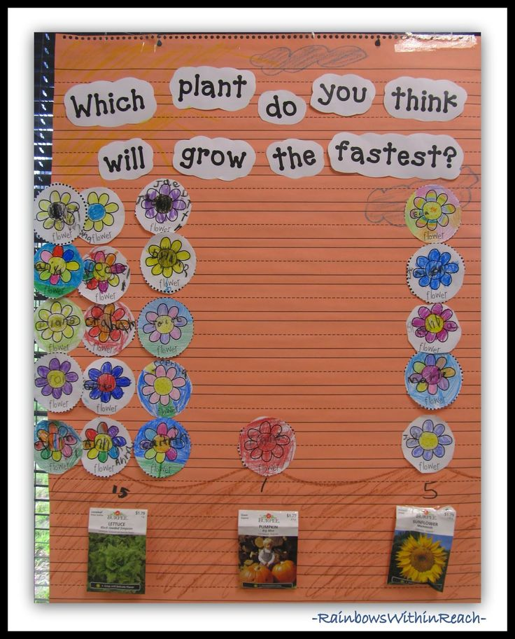 113  Graphs (Diagrams and Charts) from Early Childhood Classrooms