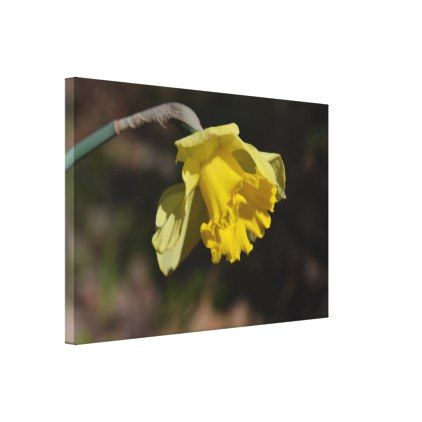"Pretty Yellow Daffodil Flower 36.00"" x 24.00"" Canvas Print - love gifts cyo personalize diy"