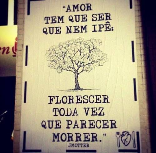 """""""Amor tem que ser que nem ipê: Florescer toda vez que parecer morrer."""""""