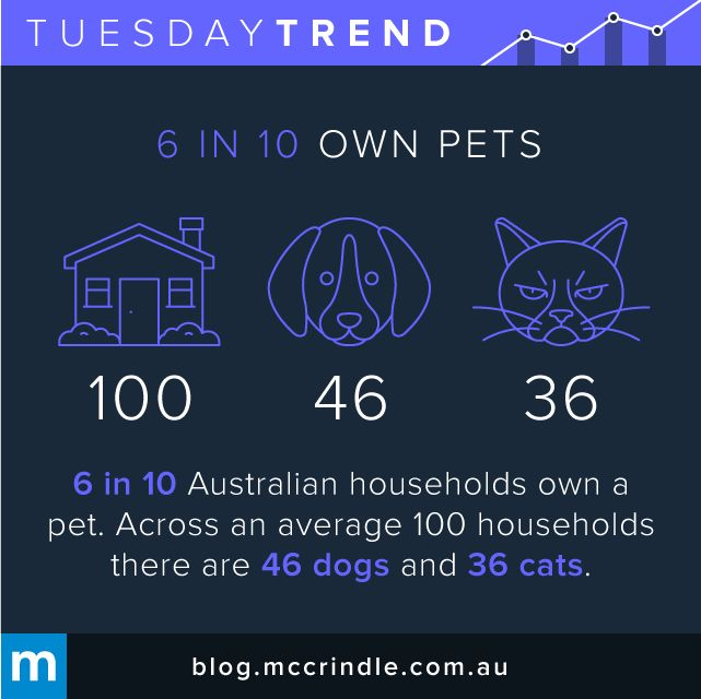 #TuesdayTrend #Pets #Dogs #Cats #Australia #Household #Home #Animals