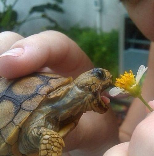 17 Best Images About Turtles On Pinterest Mouths Box
