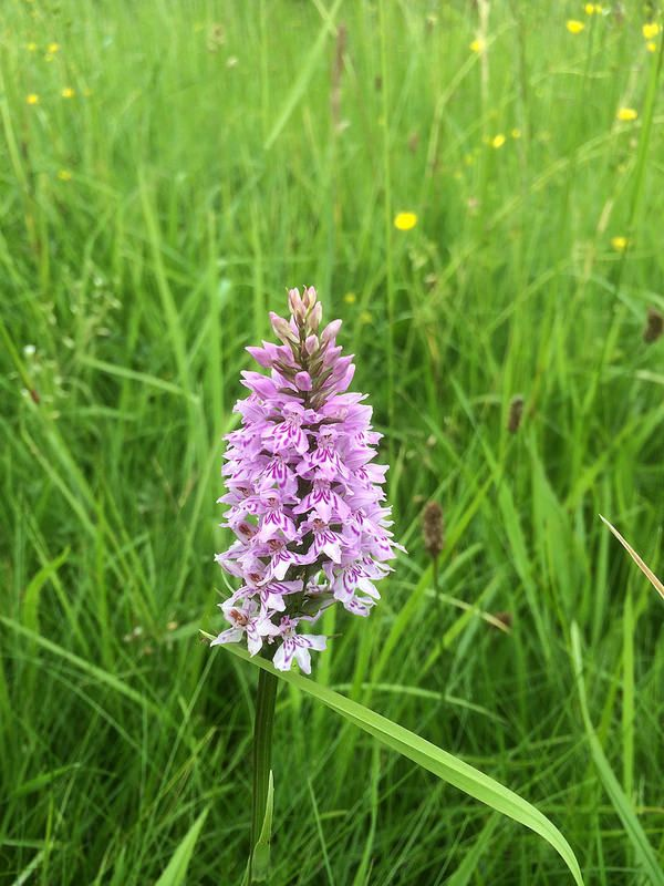 Orchid in the winter paddock