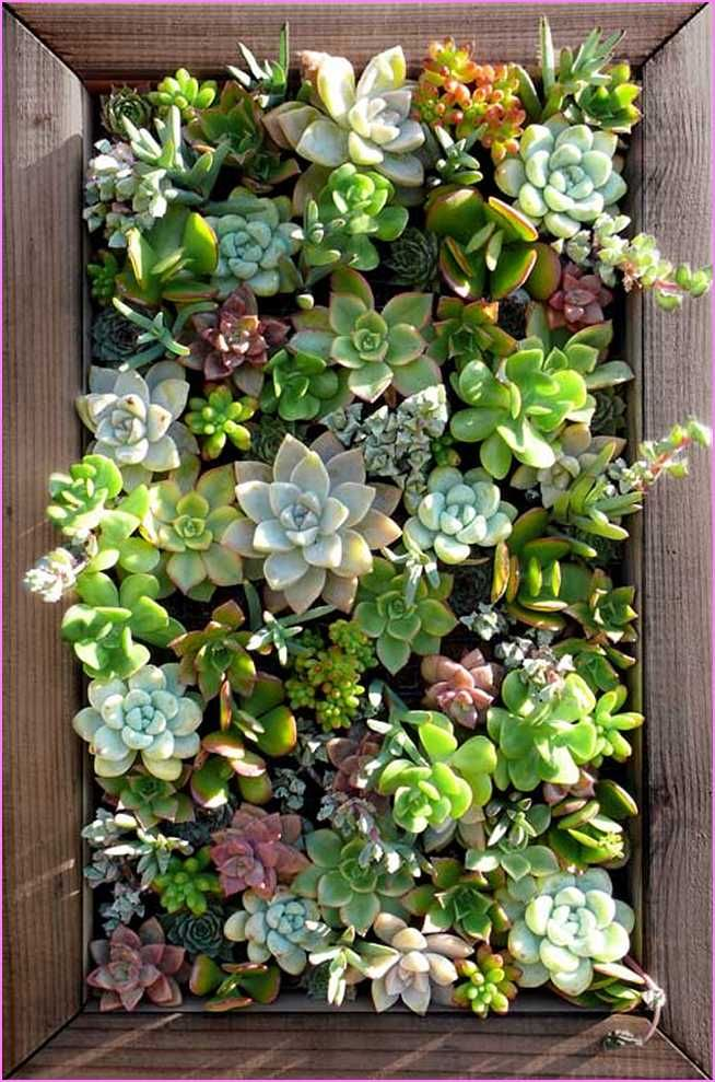 Lovely Living Wall Planter Succulents