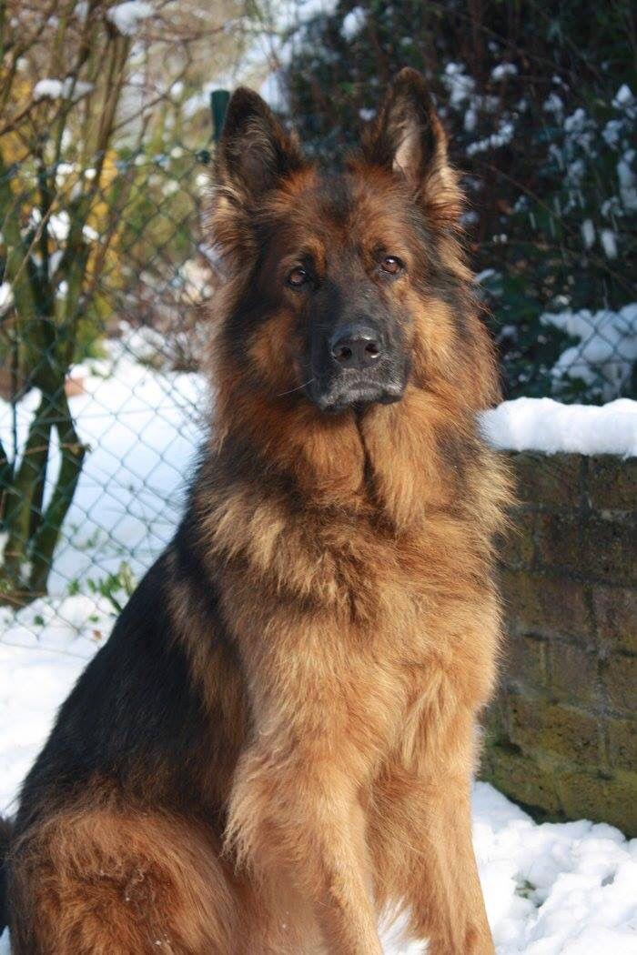 Lenja - Tiersuchhund, Pettrailer, Suchhund von Suchhundeinsatz e.V.