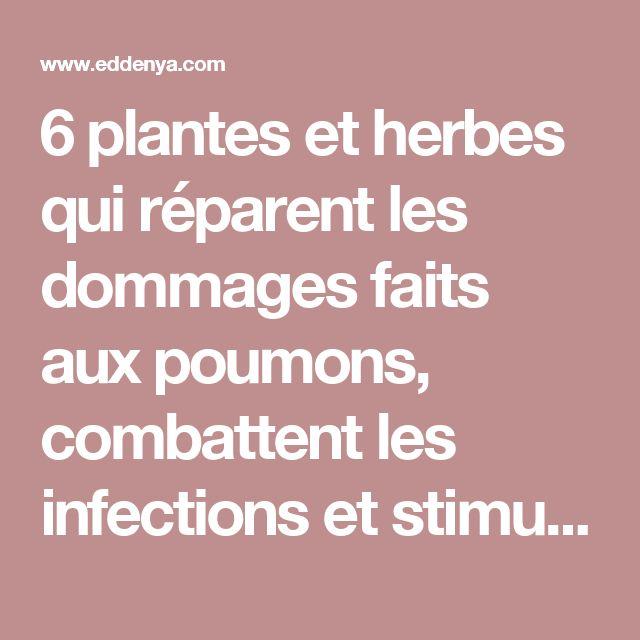 6 plantes et herbes qui réparent les dommages faits aux poumons, combattent les infections et stimulent la santé pulmonaire