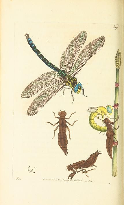 The naturalist's miscellany, or Coloured figures of natural objects -  Biodiversity Heritage Library