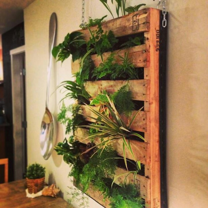 living wall made with a pallet outdoors in pinterest